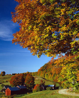 New England Autumn Print by Rafael Macia