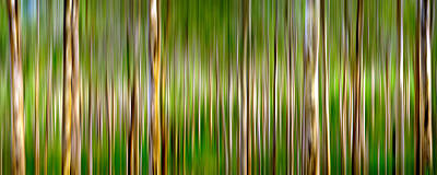Nature Abstract Photograph - New Gangs Of The Old World by Az Jackson