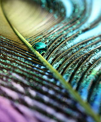 Peacock Photograph - New Journey by Krissy Katsimbras