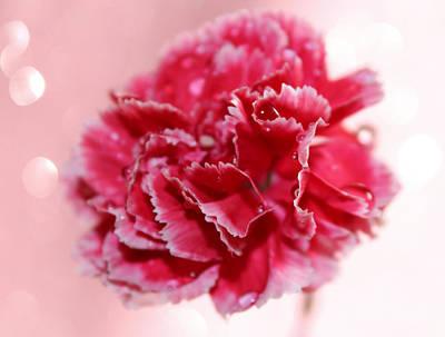 Pink Carnation Photograph - New Love by Krissy Katsimbras
