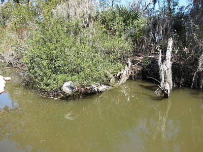 Orleans Photograph - New Orleans - Swamp Boat Ride - 1212142 by DC Photographer