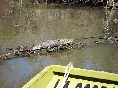 New Orleans - Swamp Boat Ride - 1212160 Print by DC Photographer