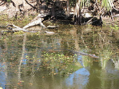 New Orleans - Swamp Boat Ride - 121251 Print by DC Photographer