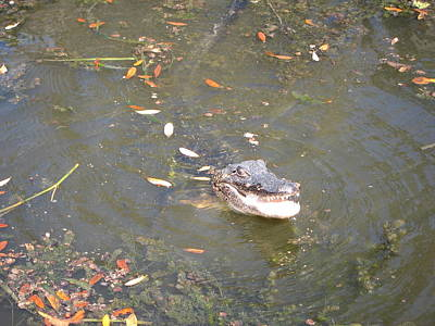 New Orleans - Swamp Boat Ride - 121255 Print by DC Photographer
