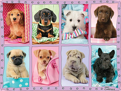 Dog Pics Photograph - New Puppy Multipic by Greg Cuddiford