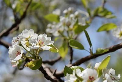 New Spring Beginnings Print by Brittany Danko