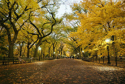 Elm Photograph - New York City - Autumn - Central Park - Literary Walk by Vivienne Gucwa