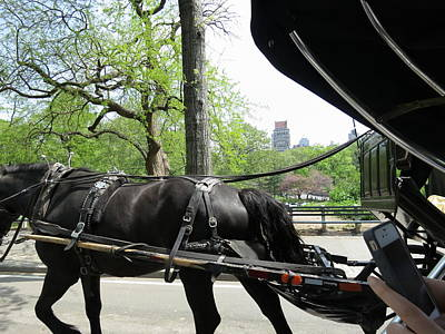 Carriage Photograph - New York City - Central Park - 12122 by DC Photographer