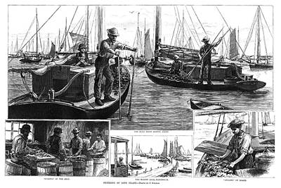Long Island Drawing - New York Oysters, 1886 by Granger