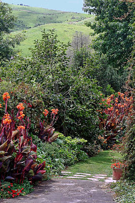 Canna Photograph - New Zealand Gaden Pathway by Linda Phelps