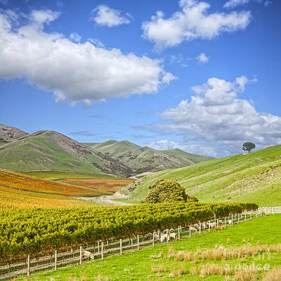 Winery Photograph - New Zealand Marlborough Vineyard In Autumn by Colin and Linda McKie
