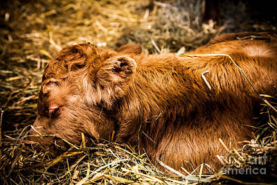 Newborn Nap Print by Sue OConnor
