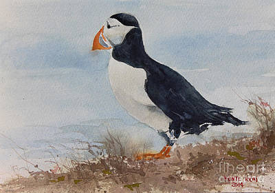 Puffin Painting - Newfoundland Puffin by Monte Toon