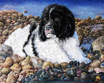 Newfie Painting - Newfoundland Puppy by Cassandra Gallant