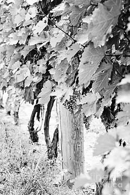 Niagara Grapes No.2 Print by Scott Pellegrin