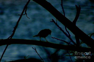 Photograph - Night Bird by Kim Pate