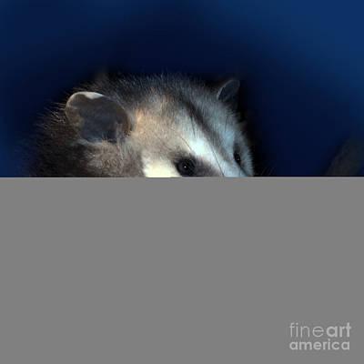 Opossum Photograph - Night Creature by Betty LaRue