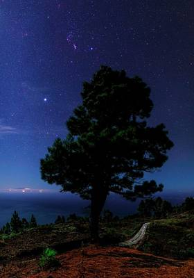 Constellations Photograph - Night Sky Over Tree by Babak Tafreshi