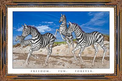Zebra Mixed Media - No Zoo Zebras by Betsy Knapp