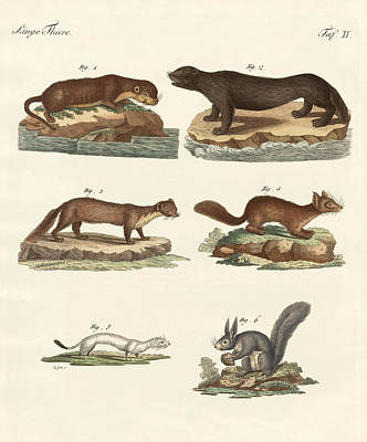 Otter Drawing - Noble Furs by Splendid Art Prints
