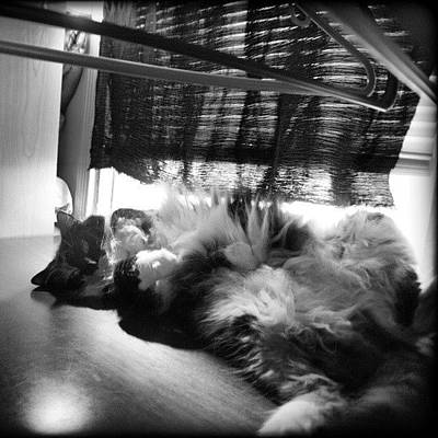 Cats Photograph - #nofilter #catwomen #love #mygirl by Mandy Shupp