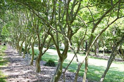 Maple Season Painting - Norfolk Botanical Garden 7 by Lanjee Chee