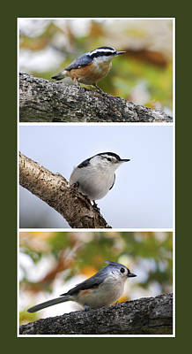 Titmouse Digital Art - North American Birds by Christina Rollo