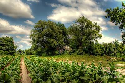 North Carolina Tobacco Farm Print by Benanne Stiens