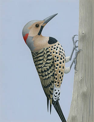 Woodpecker Painting - Northern Flicker by Nathan Marcy