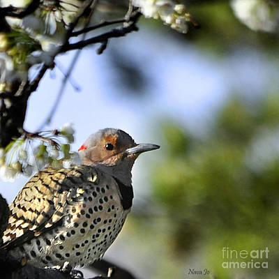 Northern Flicker Woodpecker Print by Nava Thompson