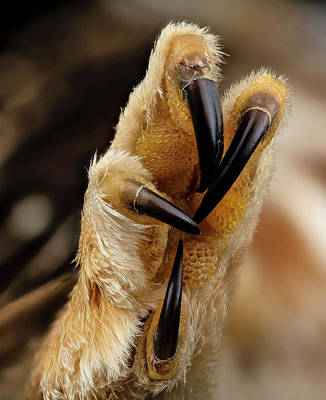 North American Wildlife Photograph - Northern Saw-whet Owl Foot by Us Geological Survey