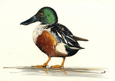 Ornithology Painting - Northern Shoveler by Juan  Bosco