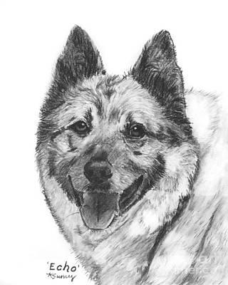 Norwegian Elkhound Sketch Original by Kate Sumners