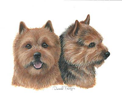 Norwich Terrier Print by Daniele Trottier