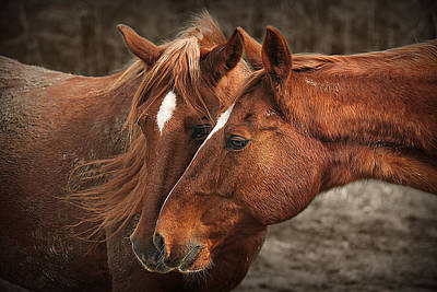 Western Photograph - Nose To Nose by Carey Dils
