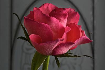Nouveau Rose. Original by Terence Davis