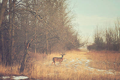 Wood Photograph - November Deer by Carrie Ann Grippo-Pike
