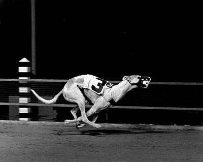 Greyhound Photograph - Number 3 Greyhound Running Hard by Retro Images Archive