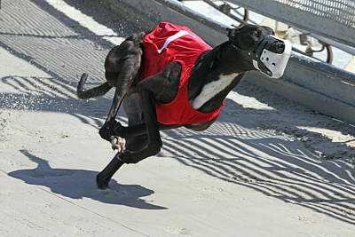 Greyhound Photograph - Number One by Randall Ingalls