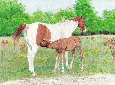 Pinto Drawing - Nursing Foal by Audrey Van Tassell