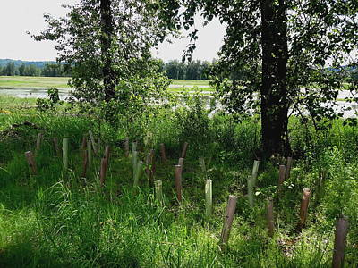 Bottomlands Photograph - Nurturing Trees To Grow by Lizbeth Bostrom