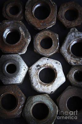 Nut In A Row Print by Bernard Jaubert