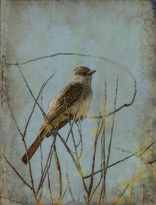 Flycatcher Digital Art - Nuttings Flycatcher In L.a. by Jason Keene
