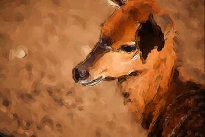 Animal Abstract Photograph - Nyala by Karol Livote