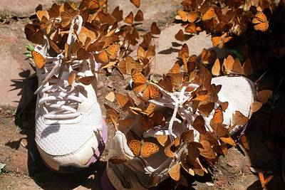 Sweating Photograph - Nymphalid Butterflies Salt Puddle Feeding by Paul D Stewart