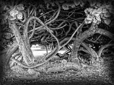 Oahu Ground Vines - Hawaii Print by Daniel Hagerman