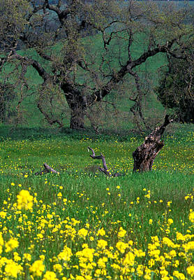 Oak And Mustard Print by Kathy Yates