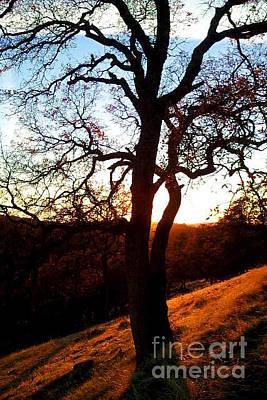 Oak Photograph - Oak Silhouette 2 by Joshua Greeson