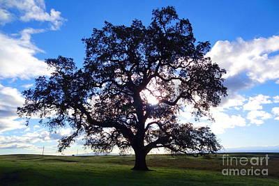 Oak Photograph - Oak Silhouette 3 by Joshua Greeson