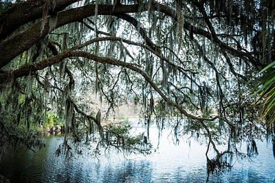 Oak Tree Lake Alice Print by Louis Ferreira